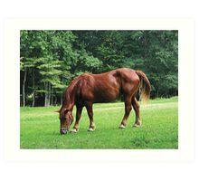 Horse Grazing in Field Art Print