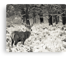 Winter Stag Canvas Print
