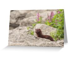 Mink Stole a Glance Greeting Card