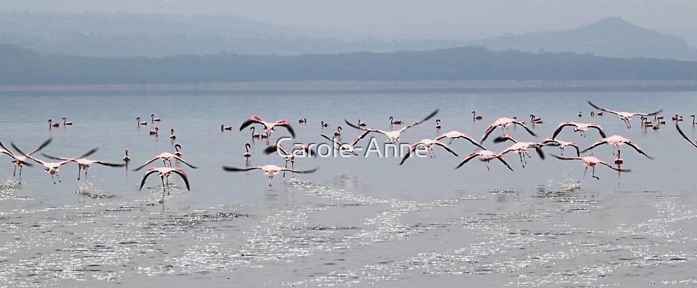 Take Off !  Flamingos at Lake Nakuru, Kenya by Carole-Anne