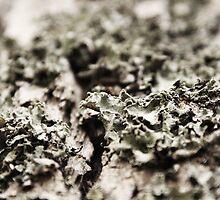 Moss on a Tree by Adam Jones