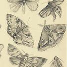 Moths by fictionalfriend