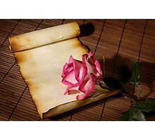 Pink rose and a parchment Photographic Print