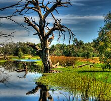 Reach or The Sky - Wonga Wetlands - The HDR Exp by Philip Johnson
