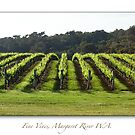 Fine Vines, Margaret River, Western Australia by thorpey