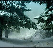 Winter Trees by Carlos Casamayor