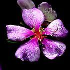 Purple by Bob Wall