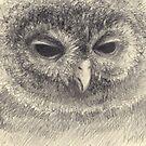 Do you like owls? by fictionalfriend