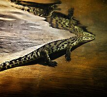 Reptile Relecting by Bob Larson