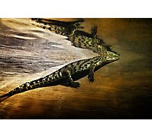 Reptile Relecting Photographic Print