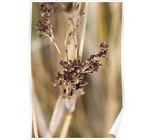 Reeds. Poster