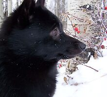 Schippy in the Snow by Toru