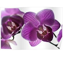 The Orchids Poster