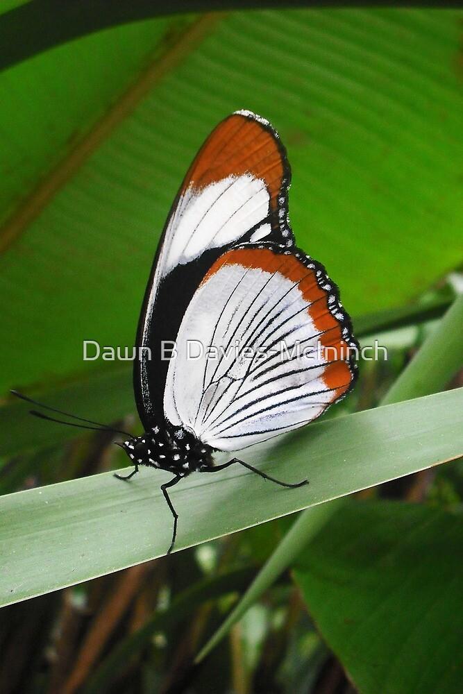 Like Painted Wings by Dawn B Davies-McIninch