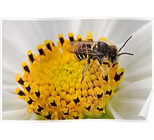 Bee on a yellow flower Poster