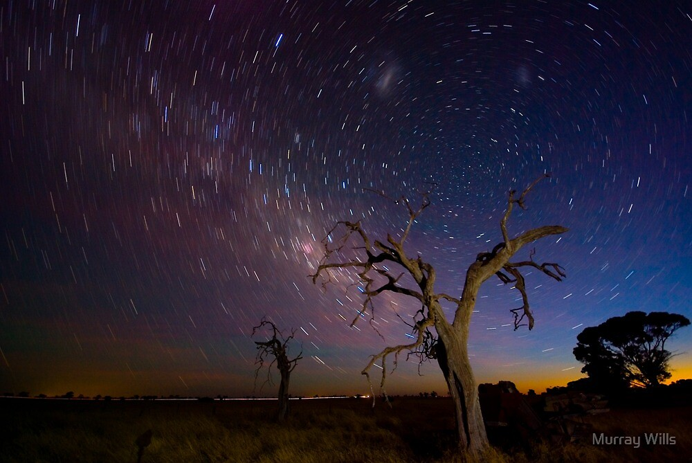 Star Trail Tree by Murray Wills