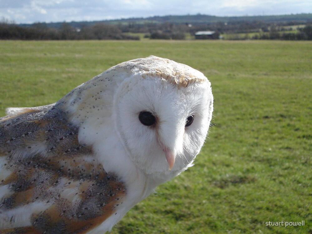 barn owl by stuart powell