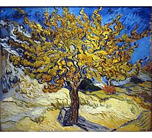 Van Gogh's Famous oil painting, The Mulberry Tree. Photographic Print