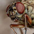 Fly head macro by Richard Majlinder