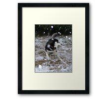Snowstorming Framed Print