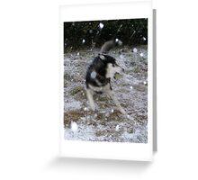 Snowstorming Greeting Card