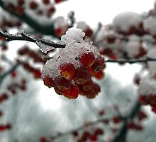 Crab Apples and Snow by Kathy Weaver