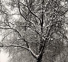 Winter Wonderland 1 by JanMurphy
