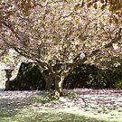 Falkland Castle carpet of blossom, Scotland, UK by BronReid