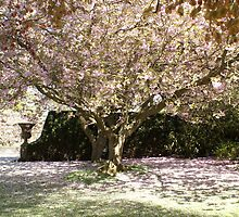 Falkland Castle carpet of blossom, Scotland, UK by BronReid