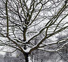 Winter Wonderland 3 by JanMurphy
