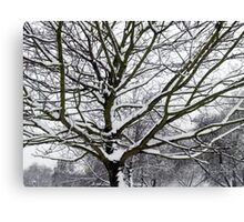 Winter Wonderland 3 Canvas Print