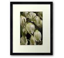 Yucca Flowers Framed Print
