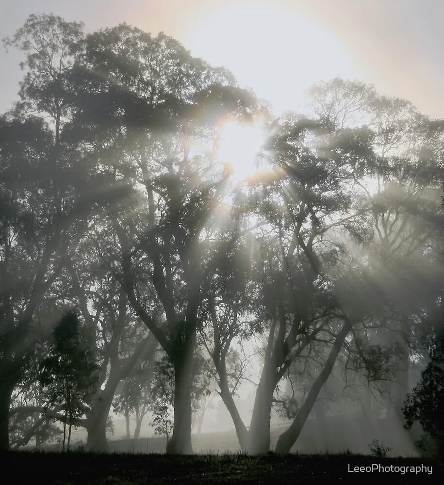 ~ Sunburst ~ by LeeoPhotography
