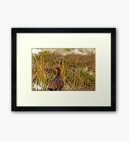 Which Way Did He Go Framed Print