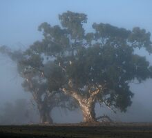 Trees in the Mist by LeeoPhotography