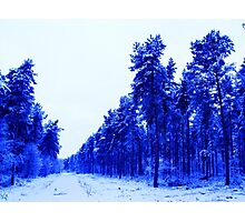 Snowy Woodland Walk in Blue Photographic Print