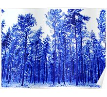 Snowy Blue Trees Poster