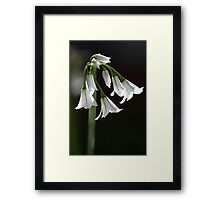 Angled Onion Weed Framed Print