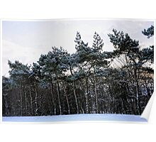Frosted Pines Poster