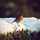Little Robin Redbreast by Vicki Isted