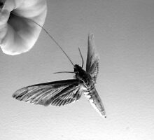 Natural History Museum Moth by aesthetic221
