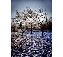 we three trees.... Photographic Print