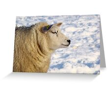 Texel sheep in the snow Greeting Card