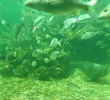Fishes 3 by Alejandro Cuadra