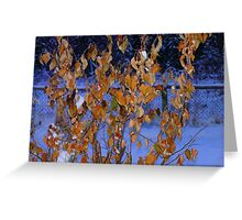 Golden Leaves on An Apple Tree in Jan, Greeting Card