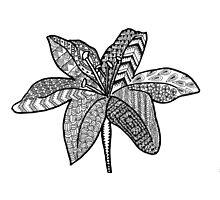 Zen lily Photographic Print