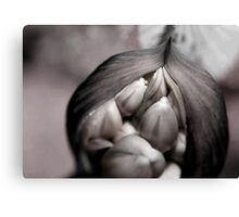 Tightly packed Canvas Print