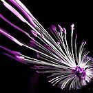 Flower Burst by CezB
