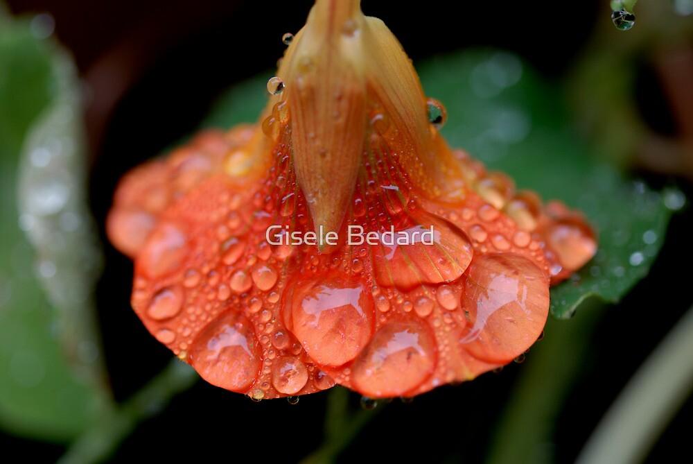 Heavy Rain by Gisele Bedard