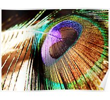 beautiful feather Poster